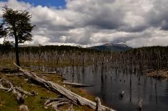 Renato Weil/A Casa Nômade- 2016.Ushuaia-AR.Terra do Fogo.Passeo Off Road pelo Lago Fagnano.Represa de castores