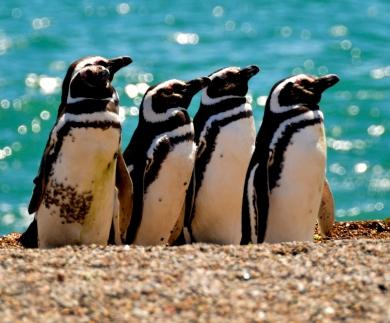 PinguimPuertoPiramides16122016weill0272.JPG