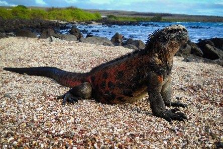 Foto Renato Weil. 2011.Equador.Galapagos,ilha de santa cruz