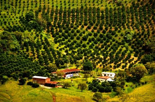 Foto Renato Weil/A Casa Nomade-2018i.Armenia .Colombia. Eixo do Café.Fazenda de Café