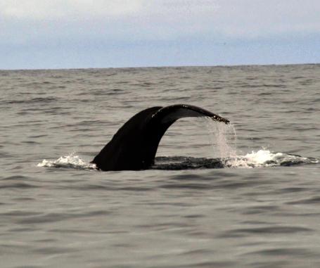 Foto Renato Weil/A Casa Nomade.2018.California .Estados Unidos. Rodovia 1 . San Francisco/Los Angeles.Monterey.Observação de baleias com a agencia Discovery